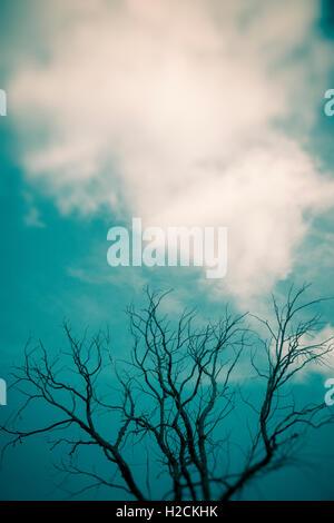 Ciel avec nuages et silhouette de branches d'arbre. Sombre, mystérieux et Moody. Photo Stock
