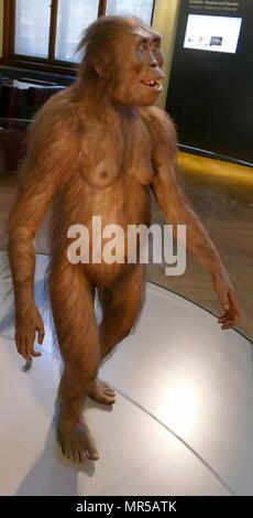Reconstruction d'un Australopithecus afarensis (Sud de l'ape de loin), une espèce d'hominin qui vivait entre 3,9 et 2,9 millions d'années. A. afarensis était mince construit, comme le jeune Australopithecus africanus. Pensé pour être plus étroitement liée au genre Homo (qui comprend l'espèce humaine moderne Homo sapiens). De Hadar, en Ethiopie. Du 3 millions d'années AV. Photo Stock