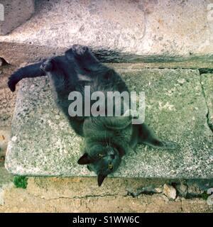 Chat dans petit village du sud de la France Photo Stock