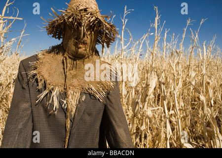 Un épouvantail dans un champ Photo Stock