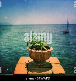 Cactus dans un pot de terre cuite sur l''île de Salina, Italie Photo Stock