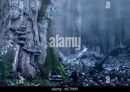 Un vieux tronc d'une forêt avec des champignons dans une forêt sombre Photo Stock