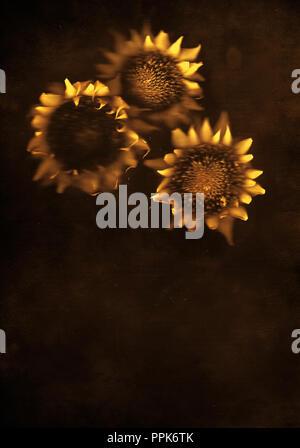 Tournesols , les fleurs, l'été,encore,floral, composition de la vie, art, artistique Photo Stock