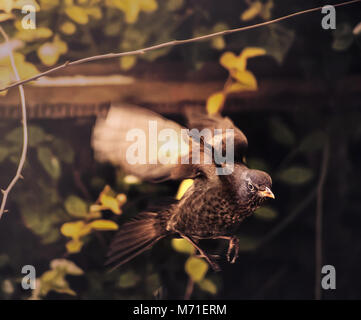 Les oiseaux qui se nourrissent dans le jardin d'hiver Photo Stock