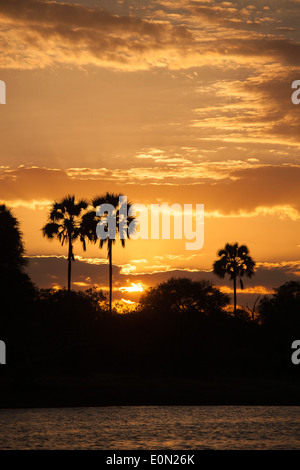 Coucher du soleil sur le Zambèze, Zambie, Afrique Photo Stock