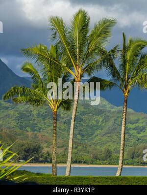 La baie de Hanalei, Kauai, Hawaï, le Pacifique, les Palmiers Photo Stock