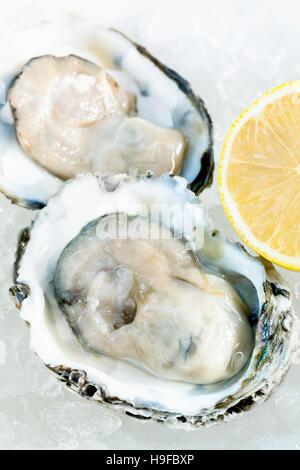 Huîtres fraîches pour l'apéritif . Photo Stock