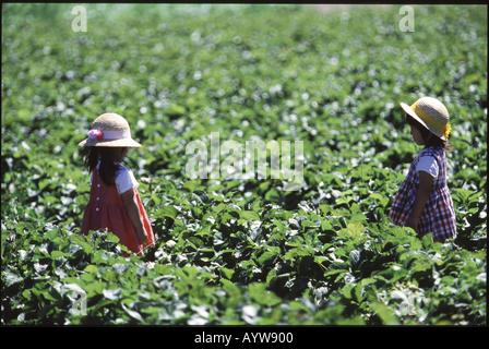 Deux in straw hat Photo Stock