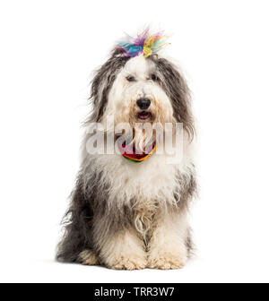 Mixed breed dog-sitting in front of white background Photo Stock
