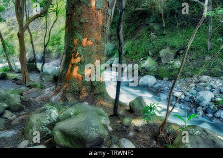 L'iao River. L'iao Valley State Monument. Maui, Hawaii Photo Stock