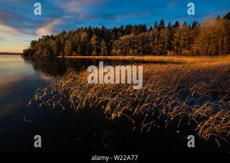 Au début de l'hiver matin à Hvalbukt dans le lac Vansjø en Østfold, Norvège. Vansjø est une partie de l'eau appelé système Morsavassdraget. Photo Stock