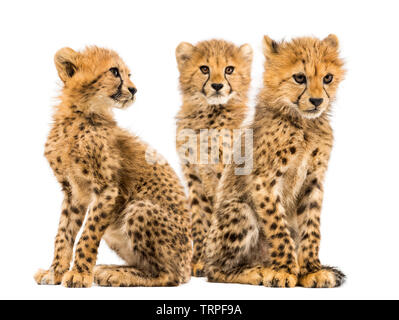 Groupe d'une famille de trois mois cheetah cubs assis ensemble Photo Stock