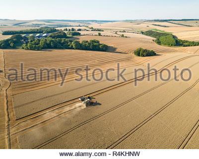 Antenne de la récolte du paysage agricole de coupe de moissonneuse-batteuse de blé d'été avec des grandes cultures de la remorque du tracteur Photo Stock