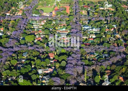 Vue aérienne de jacarandas en fleurs, banlieue de Johannesburg, ce qui en fait l'une des villes les plus vertes dans le monde.L'Afrique du Sud Photo Stock