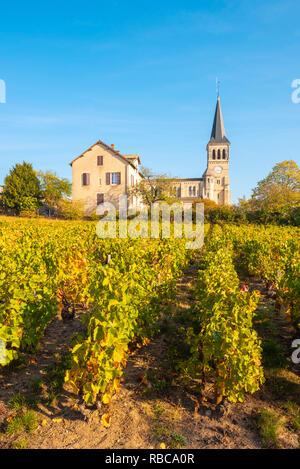 La France, l'Auvergne-Rhone-Alpes, crus du Beaujolais, région viticole de Chenas. Photo Stock