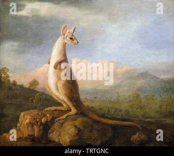 Le Kongouro (kangourou) à partir de la Nouvelle-Hollande (Australie), peinture, 1772 Photo Stock