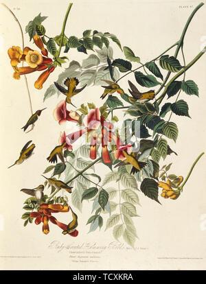 """Le colibri à gorge rubis. À partir de """"Les Oiseaux d'Amérique"""", 1827-1838. Collection privée. Photo Stock"""