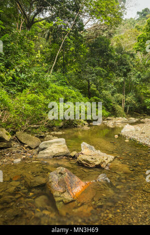 La jungle dans la Quebrada Valencia, Magdalena, Colombie Photo Stock