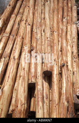 Poteau en bois, bois des forêts de bois feuillus de l'écorce du détroit commerciale dépouillée vente naturel texture recycler gérer stick Photo Stock