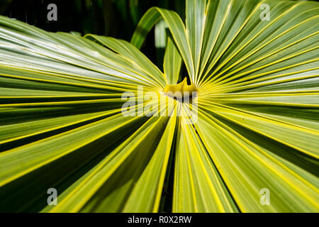 Les jardins de palmiers tropicaux froms à Miami en Floride. © Myrleen Pearson ...Ferguson Cate Photo Stock