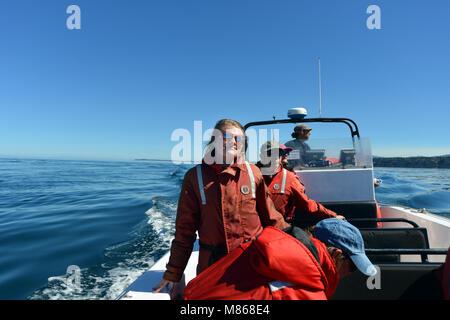 L'observation des baleines au large de la côte de l'île de Vancouver, Colombie-Britannique, Canada.MODEL Photo Stock