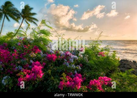 Fleurs et de littoral avec le coucher du soleil. Kauai, Hawaii Photo Stock