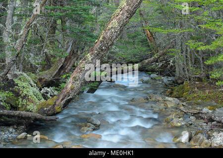 L'eau se précipiter d'une forêt d'eau à Ushuaia en Terre de Feu, le Parc National Tierra del Fuego, Argentina Photo Stock