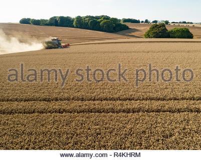 Antenne de la récolte à la moissonneuse-batteuse et champ de blé d'été des cultures agricoles Photo Stock