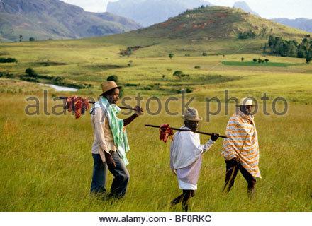 Les participants funéraire retour à la maison avec de la viande de vache sacrifiée, Madagascar Photo Stock