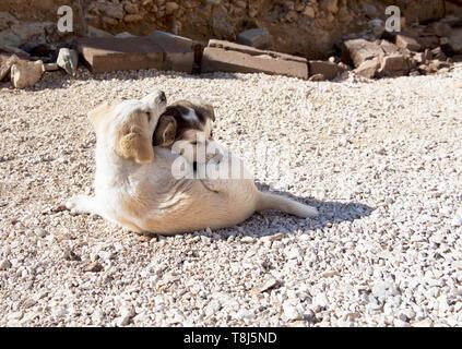Deux chiens couché au soleil ensemble, Jordanie Photo Stock