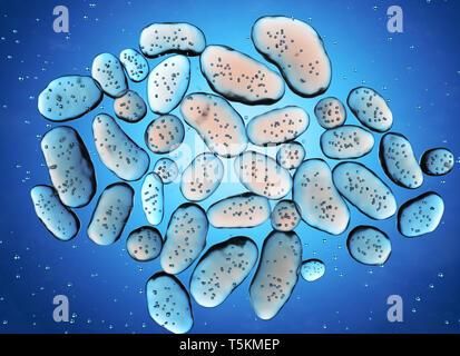 Colonie de bactéries. 3D illustration Photo Stock