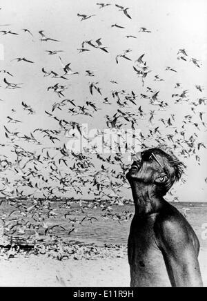 Jan 01, 1980 - pas - (photo, c des années 1970, lieu inconnu) JACQUES-YVES COUSTEAU était un officier de marine, explorateur, écologiste, cinéaste, photographe, chercheur, et le chercheur, qui a étudié la mer et toutes les formes de vie aquatique. Il a co-développé l'aqua-lung, pionnier de la conservation marine. Sur la photo: JACQUES-YVES COUSTEAU et un troupeau de mouettes. Photo Stock