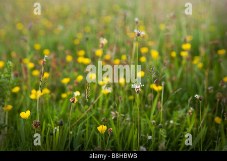 Wild Flower meadow Photo Stock