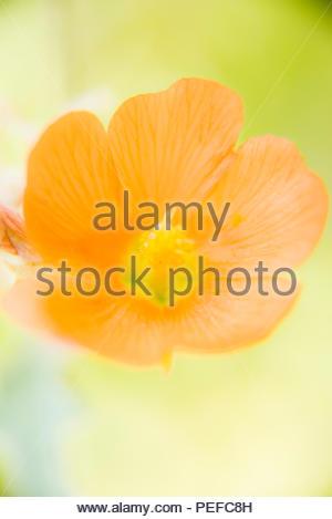 Gros plan d'une fleur de cactus. Photo Stock
