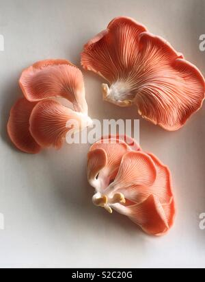 Trois champignons pleurotes Photo Stock