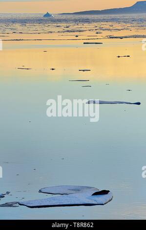 Le Groenland, côte nord-ouest, le détroit de Smith au nord de la baie de Baffin à la terre d'Inglefield, le phoque barbu (Erignathus barbatus) allongé sur un morceau brisé de la banquise en Arctique Photo Stock