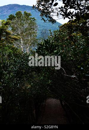 La superbe vue depuis la montagne de Hong Kong, le pic Photo Stock