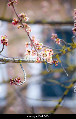 Arbre fleuri Photo Stock
