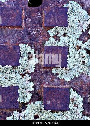 Motifs abstraits de lichen Photo Stock