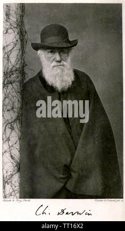 CHARLES DARWIN (1809-1882) Naturaliste anglais Photo Stock