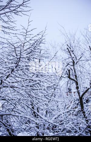 Direction générale des arbres enneigés Photo Stock
