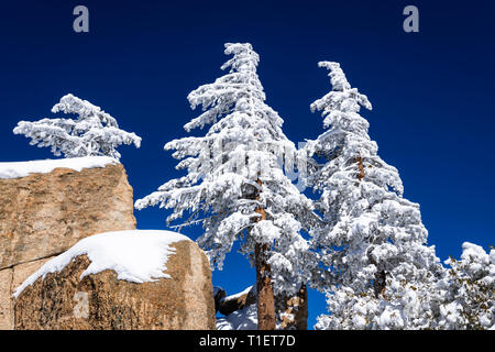 La neige a couvert de pins et de rochers dans les montagnes de San Bernardino, forêt nationale de San Bernardino, California USA Photo Stock