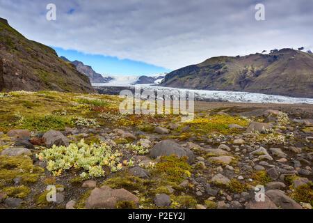 Montagnes, glaciers, langue du glacier, Skaftafelljoekull, Islande, Europe Photo Stock