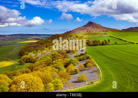Roseberry Topping et Newton Woods au printemps, North Yorkshire Moors National Park Photo Stock