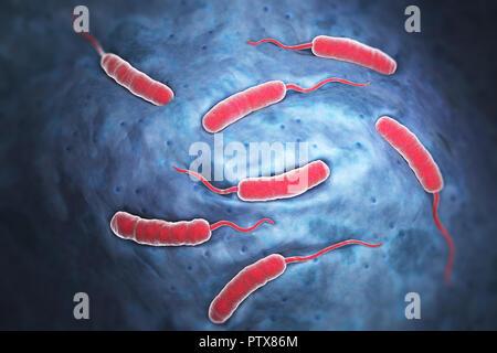 Cholerae bactéries qui causent le choléra. 3D illustration Photo Stock