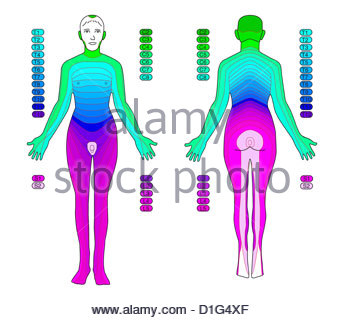 ILLUSTRATION - DERMATOMES Photo Stock