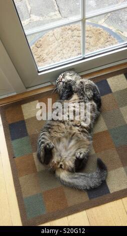 Cat ayant une vie difficile Photo Stock