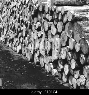 Une pile de journaux de réduire en noir et blanc Photo Stock