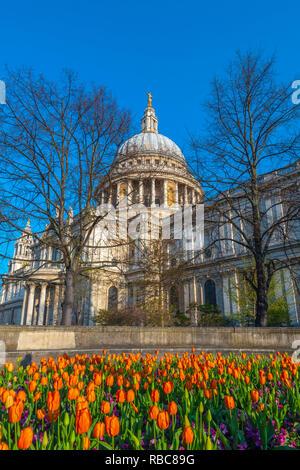 Royaume-uni, Angleterre, Londres, la Cathédrale St Paul au printemps, les tulipes Photo Stock