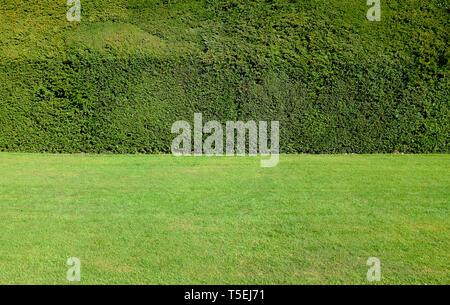Yew parés et coupés en couverture de pelouse jardin, Norfolk, Angleterre Photo Stock